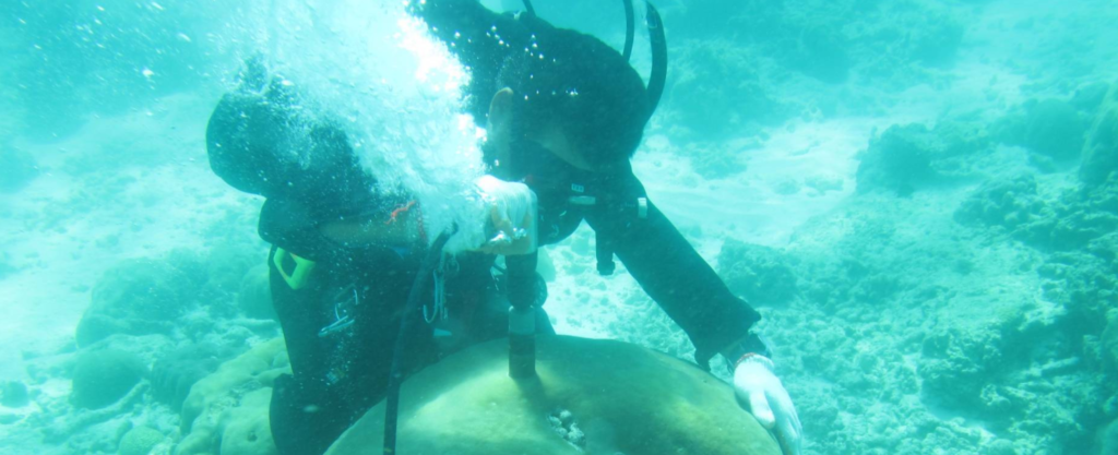 Photo of diver examining coral